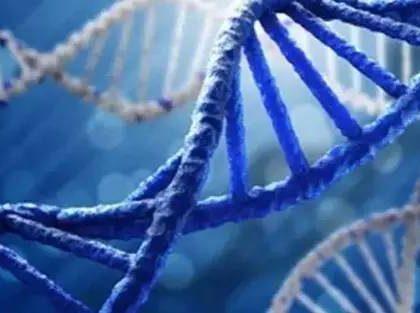 """深圳企业参与生命科学项目""""地球生物基因组计划""""即将启动  目标破译地球所有生命基因组"""