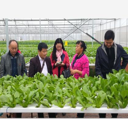 广东省组建逾400亿元农业基金