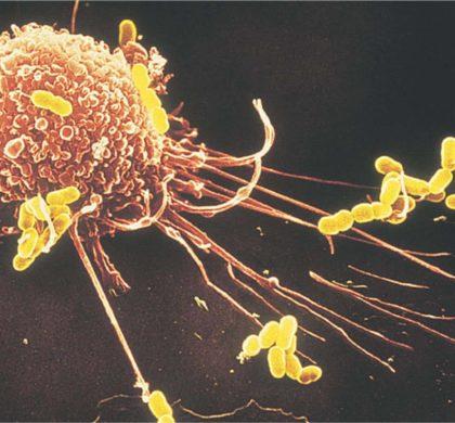 """美科学家确认癌细胞可""""远程缴械""""免疫系统"""