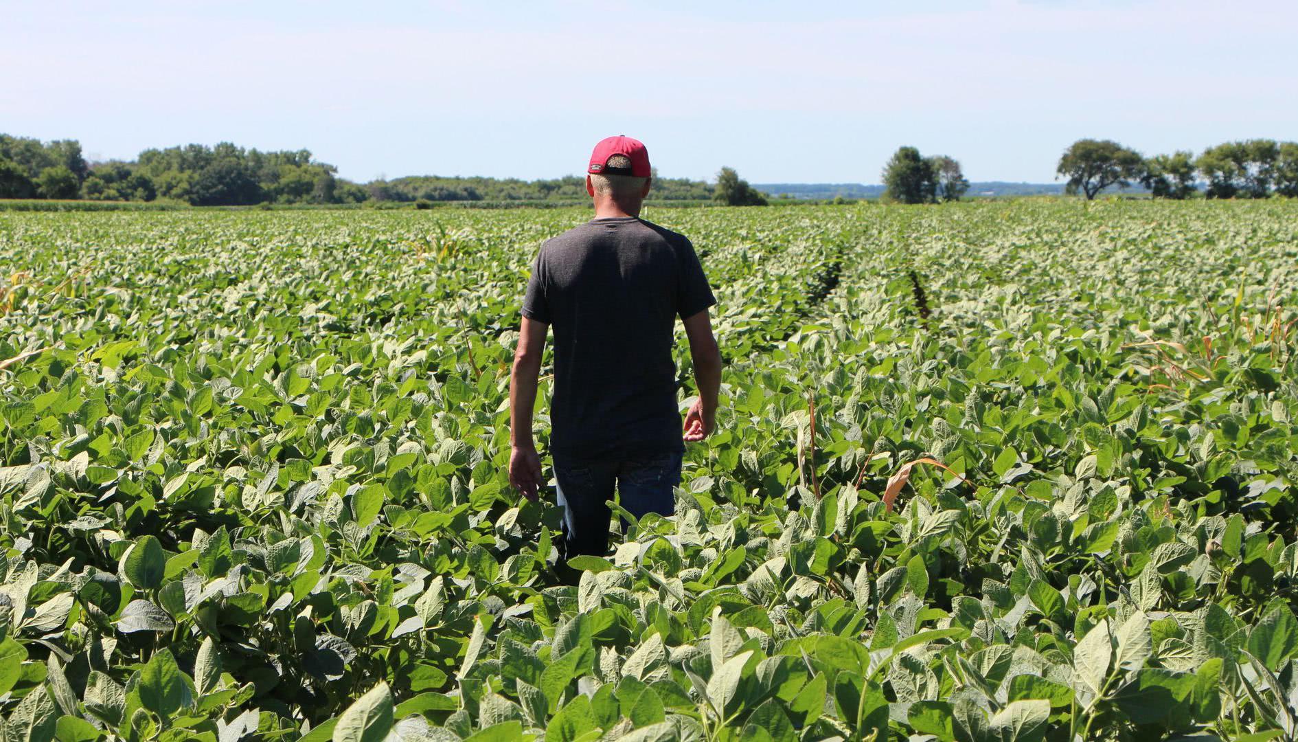 通讯:希望中美经贸摩擦早日解决——一位美国豆农的心声