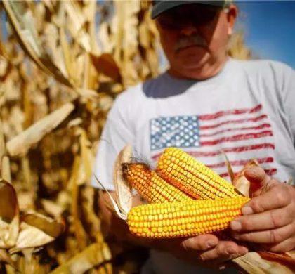 中国购史上最大规模美国玉米
