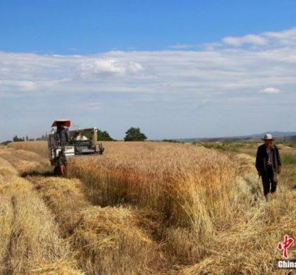 中国农业农村部:粮食安全有保障 价格将基本稳定